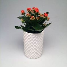 Flowering Kalanchoe - Tall Ceramic Planter