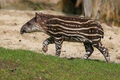 31 fotos que vão te transportar para o Pantanal