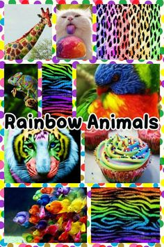 Rainbow Animals