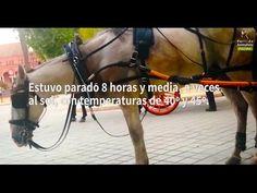 PACMA documenta la explotación animal en los coches de caballos de Sevilla