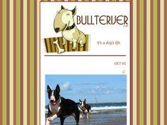 Bullterijer.com Hobb