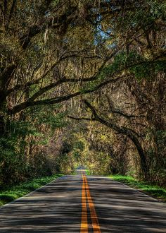 Meridian Road, one of the canopy roads located in Tallahassee, Florida; taken by Scott S. Baxter