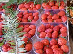 Bloc-Notes Viaggi: Una domenica a Nemi tra fragoline e palloncini arancioni | #FACCEdaBA #italy