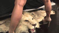 Fur Rug, Tattoos, Animals, Tatuajes, Animales, Animaux, Tattoo, Animal, Animais