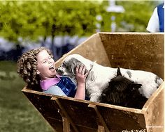 Shirley Temple, 1935 Shirly Temple, Classic Hollywood, Old Hollywood, Hollywood Actresses, Santa Monica, Scottish Terriers, Cairn Terrier, Scottie Dogs, Temple Movie