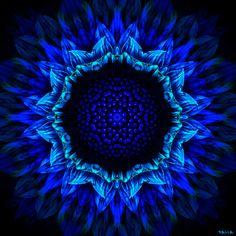 https://flic.kr/p/aCk8Bg | Girassol Azul