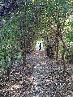 Nature's club at Surat. One place in the city where you can recall the forest memories