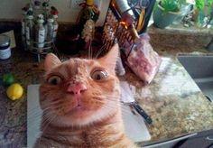 CAT SELFIE GONE WRONG