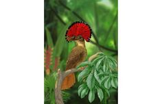 Find and save ideas about Colorful birds, Pretty birds, Beautiful birds and Tropical birds. Pretty Birds, Beautiful Birds, Animals Beautiful, Cute Animals, Funny Animals, Kinds Of Birds, All Birds, Love Birds, Angry Birds