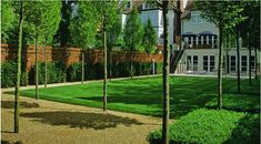Lawn with gravel border and standard trees