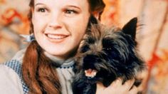 Wizard of Oz, love cairn terriers too!
