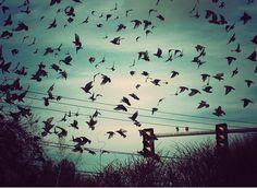 rad birds