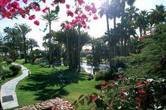Hotel Riu Palace Oasis - Hotel Garden - Hotel in Gran Canaria - RIU Hotels & Resorts