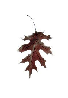15 Ideas Oak Tree Photography Autumn Leaves For 2019 Autumn Day, Autumn Trees, Autumn Leaves, Oak Leaves, Fairy Oak, Tree Sleeve Tattoo, Tree Wallpaper, Tree Photography, Trendy Tree