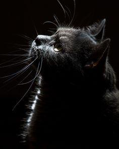 My Cat By Laszlo Olah