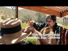Ruta del Vino de Baja California: Experiencias Turísticas -