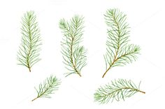 Watercolor pine branches by Helga Wigandt on @creativemarket