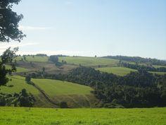 GRAZING FARM IN SEMI RUSTIC LANDSCAPE, VOLCANO VIEW, FOREST