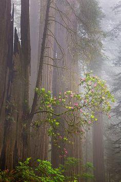 Redwood National Park by Jesse Estes