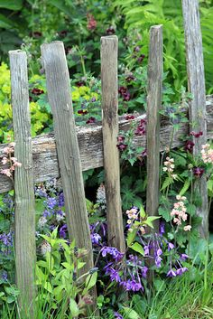 DIY Garden Fence Ideas to Keep Your Plants rustic fence in potager by anumrustic fence in potager by anum Picket Fence Garden, Backyard Fences, Garden Fencing, Potager Garden, Farm Fence, Garden Plants, Horse Fence, Brick Fence, Concrete Fence