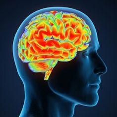 Herbal Remedies For Memory Loss