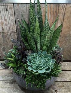 #succulent #garden #gardening #succulents #cactus #cactus #garden #gardening #succulent #succulents