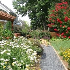 Dog Yard Design, Pictures, Remodel, Decor and Ideas