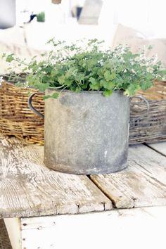 herbs in galvanized pot Container House Design, French Country Decorating, Garden Styles, Wabi Sabi, Container Gardening, Herb Gardening, Garden Inspiration, Garden Pots, Outdoor Gardens