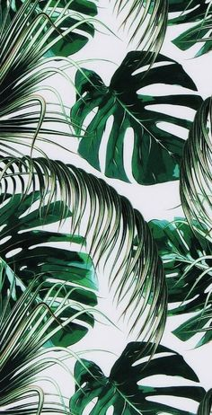 Green leaves aesthetic wallpaper aesthetic wallpaper iphone aesthetic background aesthetic background iphone wallpaper # aesthetic # backgrounds – Background – Best of Wallpapers for Andriod and ios Leaves Wallpaper Iphone, Plant Wallpaper, Tropical Wallpaper, Green Wallpaper, Cute Wallpaper Backgrounds, Wallpaper Iphone Cute, Cute Wallpapers, Vintage Backgrounds, Office Wallpaper