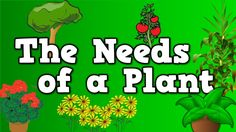 The Needs of a Plant (song for kids about 5 things plants need to live) you tube!  Harry Kindergarten songs