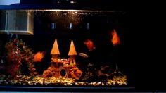 Большие и маленькие аквариумные рыбки