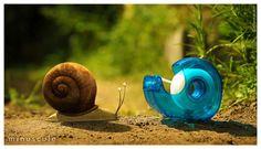 Risultato della ricerca immagini di Google per http://www.itrnews.com/images/2012/2012-02-10-Escargot.jpg