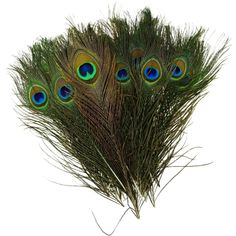 50pcs Real, Natural Peacock Feathers about 10-12Inches - Feathers