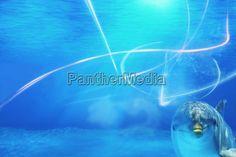 PantherMedia 7551540 - animal, aqua, aquarium, bottlenose, bottlenose dolphin, bubble, clean, color, deep, deep blue, design, diving, dolphin underwater abstract background marine life blue, drop, effect, element, exotic, natural, nature, ocean, sea, swim, transparent, wallpaper, water