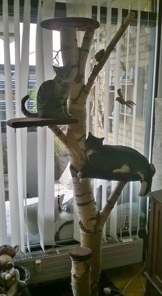 Cats Toys Ideas - Cat tree My homemade cat tree My own creation. - Ideal toys for small cats Niche Chat, Diy Cat Tower, Cat Climbing Tree, Cat Climber, Cat Towers, Ideal Toys, Cat Enclosure, Cat Room, Cat Condo