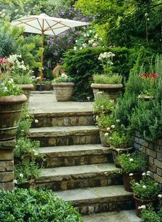 Potted garden lining beautiful stone steps...