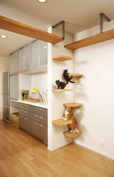 Japan's Perfect Cat House