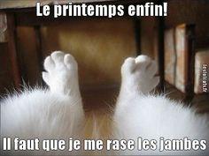 droles de jambes de un chat a rire