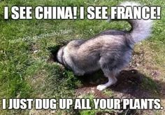 I See China, I see France! -- I just dug up all your plants!