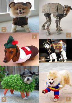 Dog Costume Inspiration   HandsOccupied.com