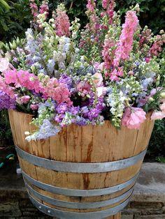 Blumen, Pflanzen, bunt, Fass, lila, rosa
