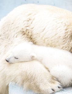 NOTHING is better than MOM'S WARMTH!