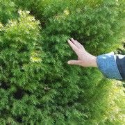 Hand feeling the texture of a shrub