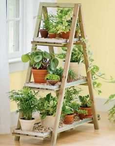 This would be a cute way to grow a bunch of herbs on a patio! And a great way to use all those old ladders I have!