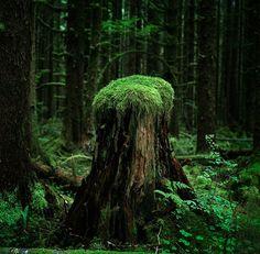 beautiful #nature