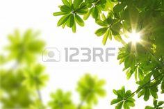 Fondo de primavera de la naturaleza con rayo de sol  Foto de archivo