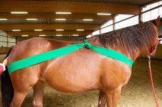 Dragon Crafts, Riding Lessons, Horse Crafts, Horses And Dogs, Spanish Language Learning, Horse Training, Stables, Chinese Desserts, Chinese Food
