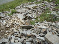 Svišť - Marmot - Alpes - Austria - 2009
