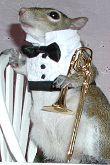 Sugar Bush Squirrel - Trombone Solo