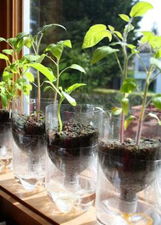 Inexpensive Garden Seed Starting Containers